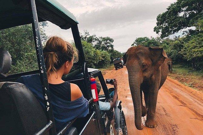 Evening Safari in Kaudulla National Park from Negombo
