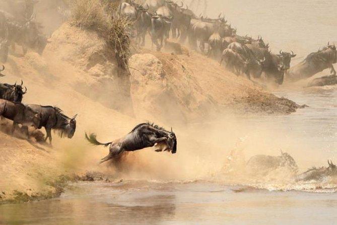 2 Days Masai Mara Group Joining Budget Safari