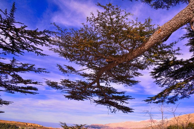 Private Car - Qadisha valley, Cedars of God & Baalbek - Day Tour from Beirut