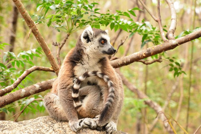 New Car Rental / Madagascar Southern Tour