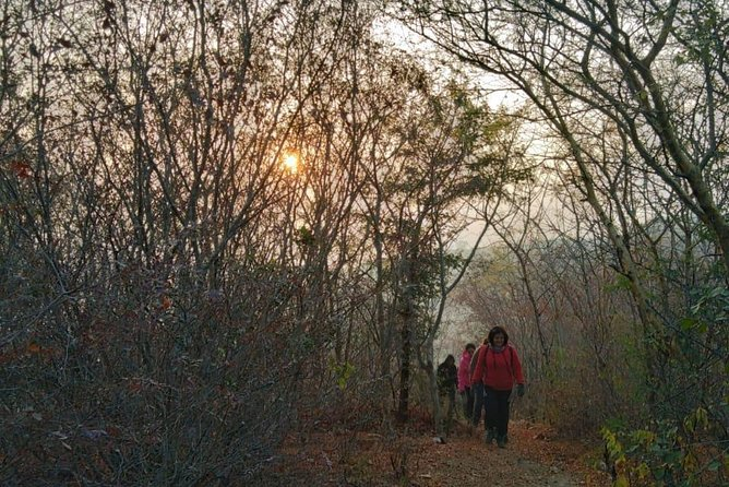 Trek the forests of Jaipur! An unforgettable hike ! Real Jungle experience!