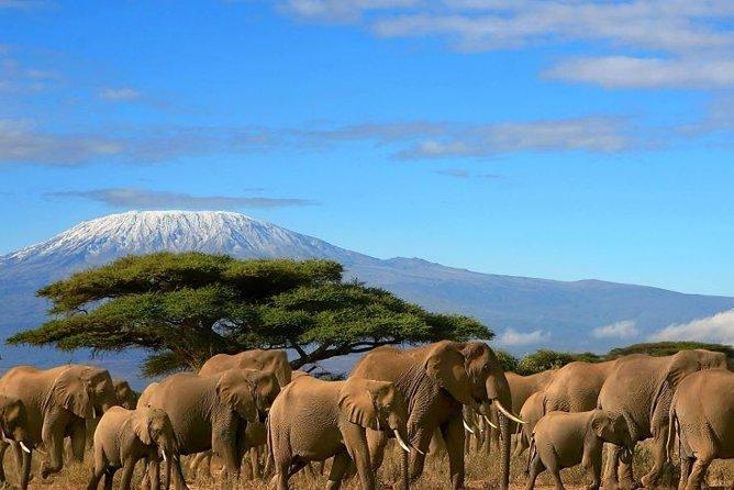 2 Days Amboseli Private Safari
