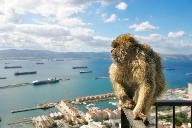 Gibraltar Rock, Barbary Apes Tour