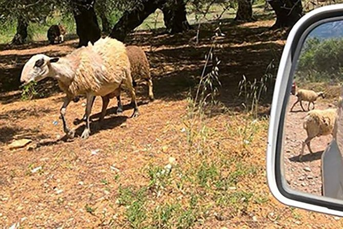 Jeep Safari 4x4 Eye of the Shepherd in Crete with Lunch from Chersonissos