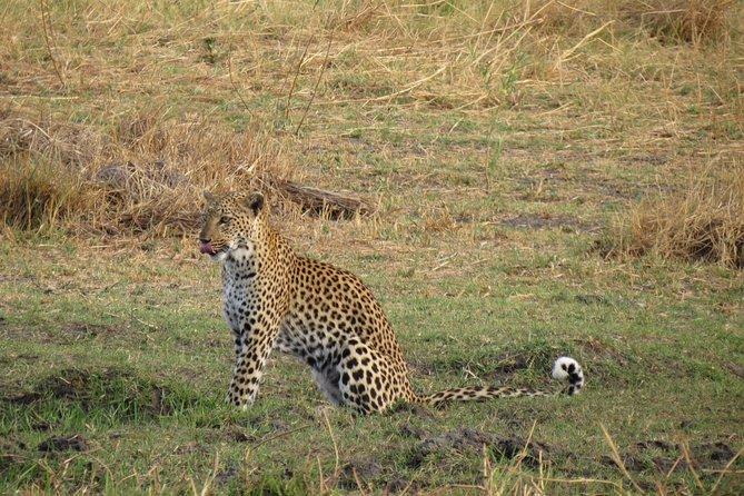 1 Day in Moremi Game Reserve, Botswana