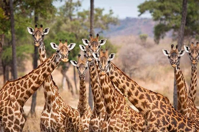 5 Day Mikumi & Ruaha Safari