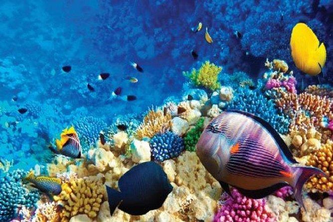 Full-Day Snorkeling Adventure in Ras Mohammed National Park