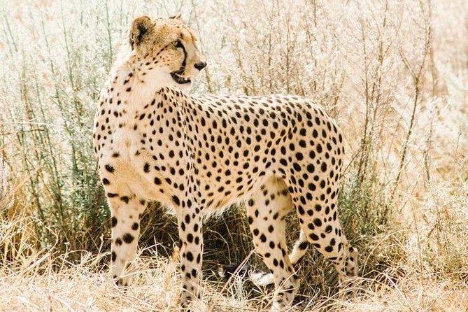 3 Days Taste of Tanzania Midrange Safari