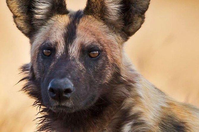 6 Days Budget Safaris