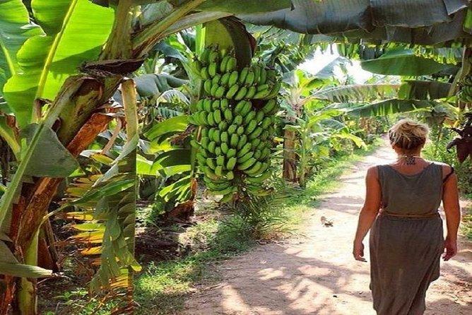 Cheap trip to banana island