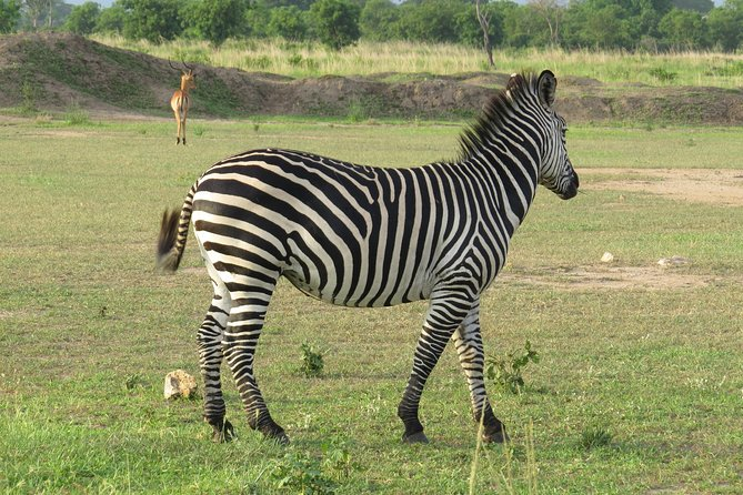 Tanzania and Zanzibar Family Safari 14 Days
