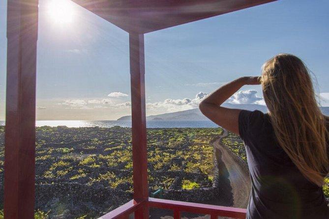 Wine Tour in Pico Half Day