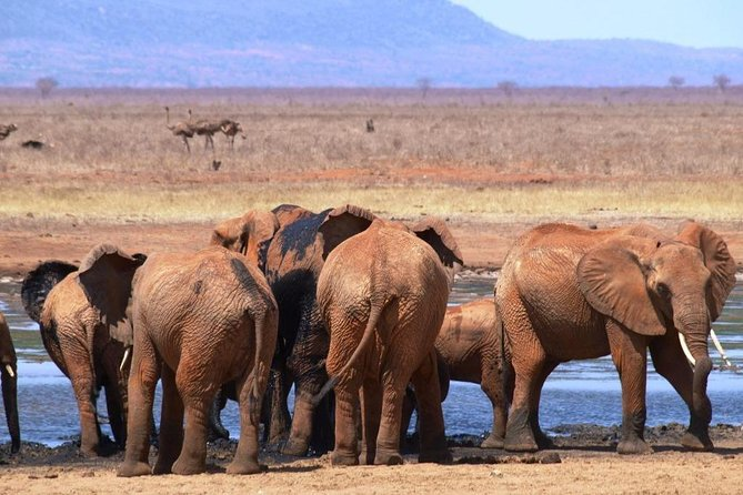 Safari 2 Days Tsavo East