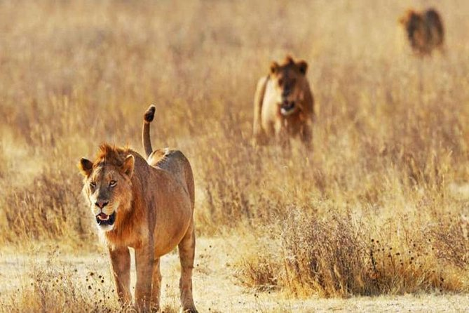 Day Trip - Tsavo East National Park ( Man Eater Lions of Tsavo & Other Big Five)