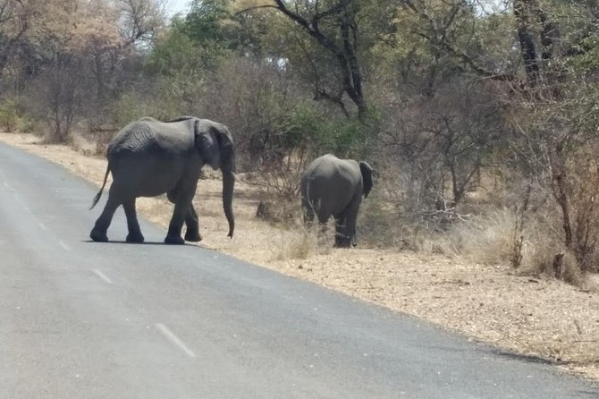 2 Days Hwange National Park from Victoria Falls photo 2