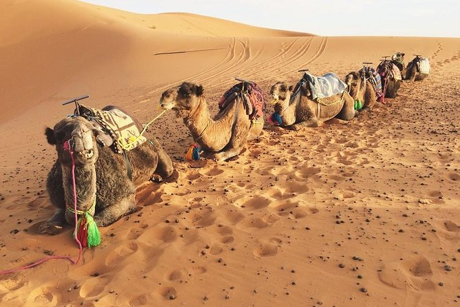 Sunset Camel Safari 2 hours Trip with Bedouin meal