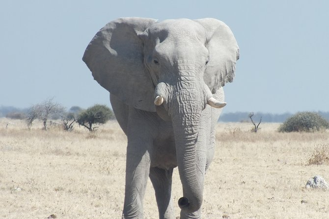 Chobe 4x4 Safari and Boat Safari with Lunch included 1 day