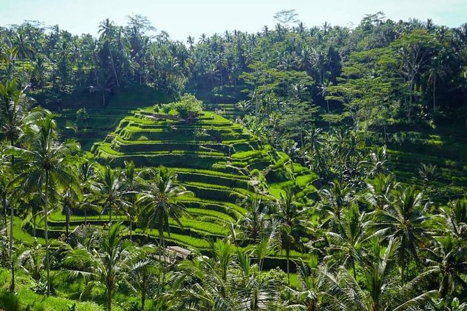 Half-Day Private Tour to Exploring Ubud Village