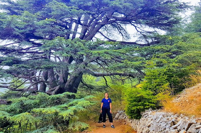 Full-Day Private Trip to Cedars, Baalbek and Ksara from Beirut