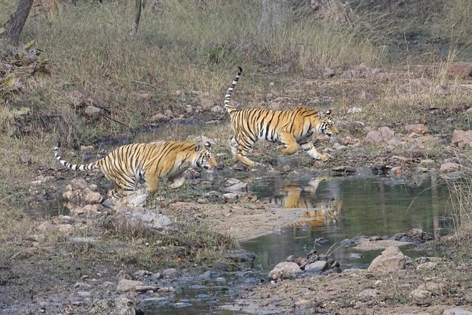 Exclusive Ranthambore Tiger Safari