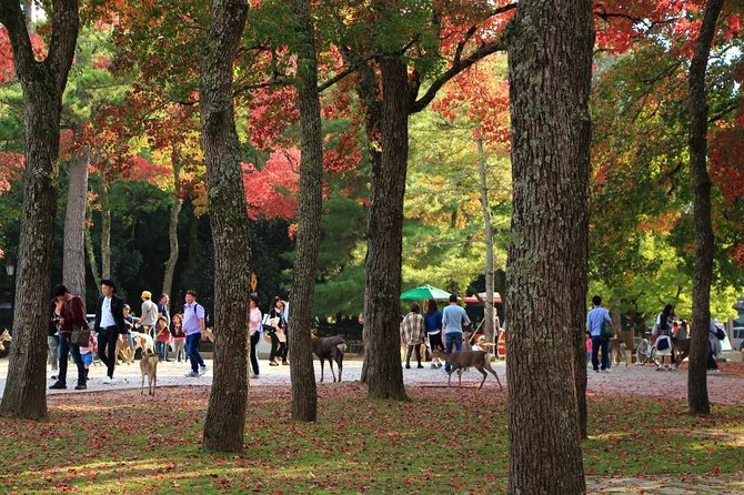 All must-sees in 3 hours - Nara Park Classic Tour!