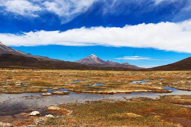 Tour Isluga National Park / Altiplano (FULL DAY)