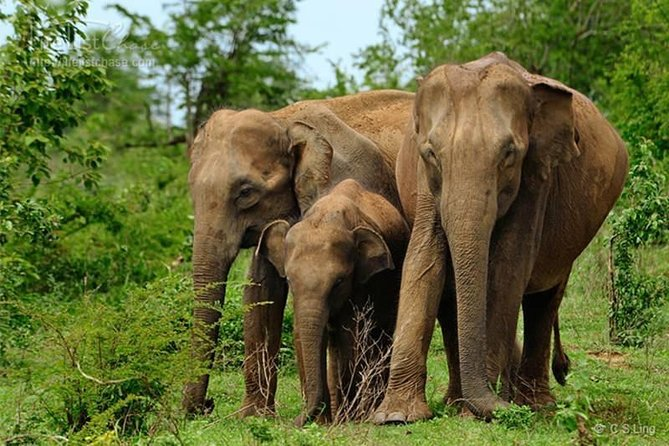 Safari at Wilpattu National Park from Negombo (All inclusive day tour) photo 12