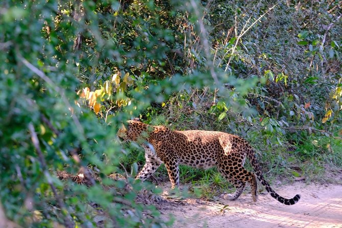 Safari at Wilpattu National Park from Negombo (All inclusive day tour) photo 26
