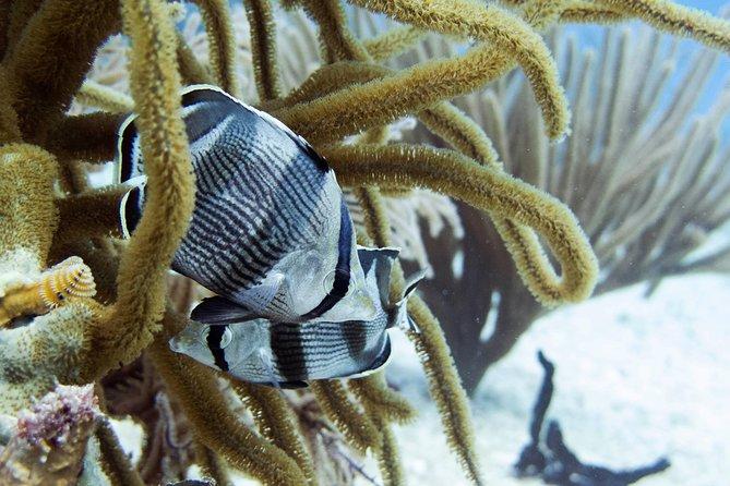 Full-Day Playa del Carmen Reef Diving Activity