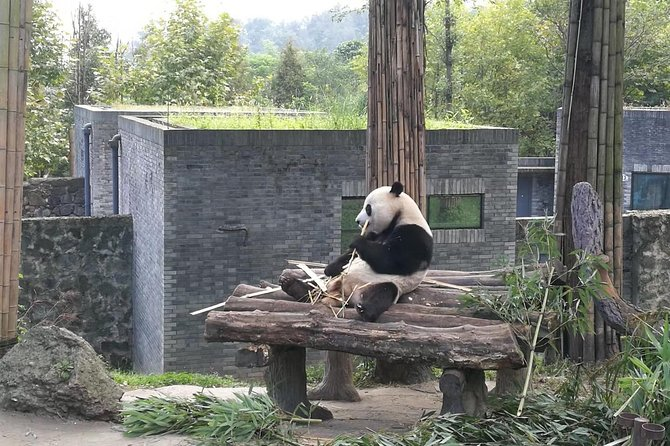 Private Chengdu Panda Base Day Tour by Round-way Flight from Guangzhou