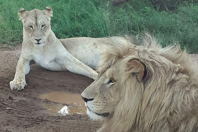 Kruger National Park Full Day Tour