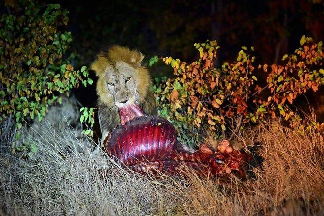 Kruger National Park Night Safari (4x4 Jeep)