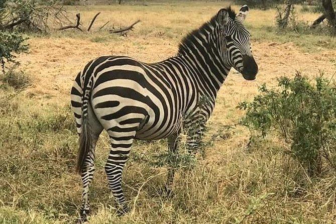 4days Luxury Safari Serengeti and Ngorongoro Crater