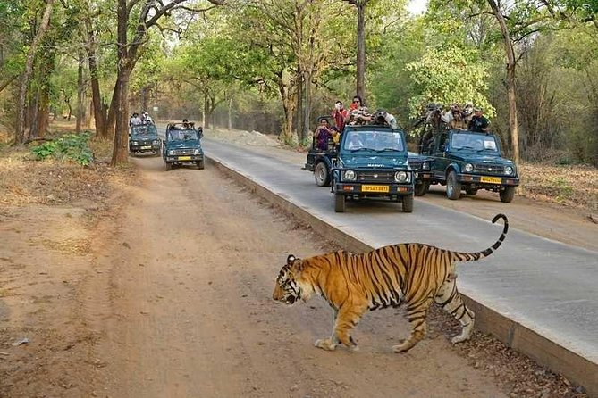 Private Delhi, Agra, Jaipur Golden Triangle Tour Including Ranthambhore Park