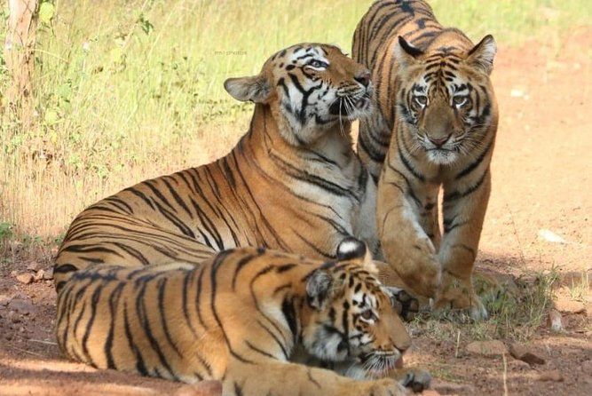Private Luxury 5 Day- Golden Triangle Tour With Ranthambhore Tigers Park