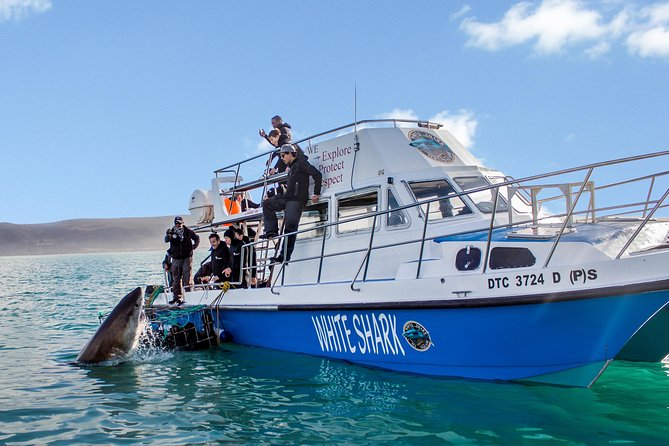 Shark Cage Diving - Adventure Meets Conservation!
