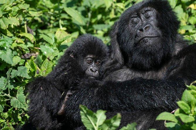 Gorilla Trekking and Wildlife safari