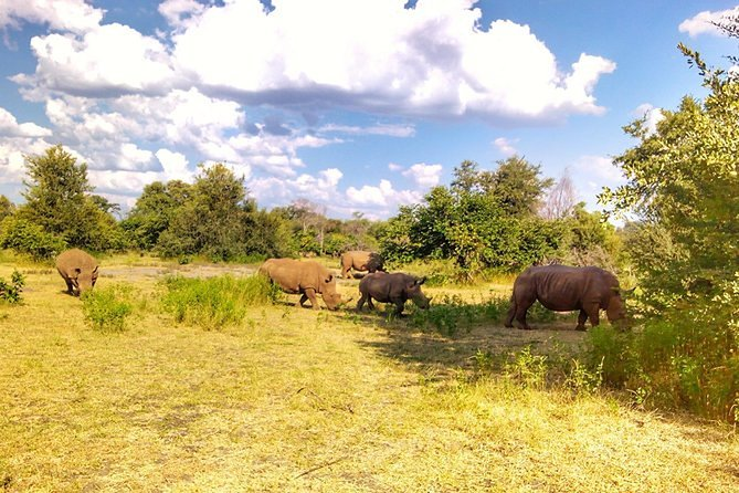 Game Drive into the Musi Otunya National Park