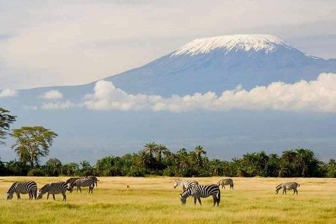 Mount Kilimanjaro climbing Lemosho route