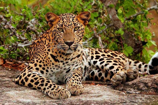 Jeep Safari to Yala National Park With an Expert Of Wild-Life