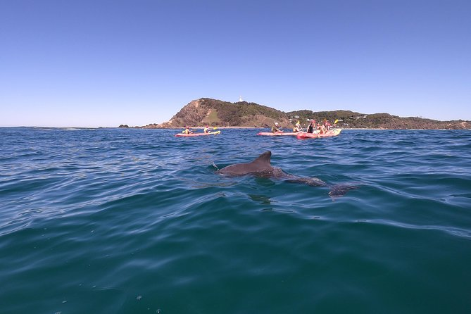 Kayaking with Dolphins in Byron Bay Guided Tour