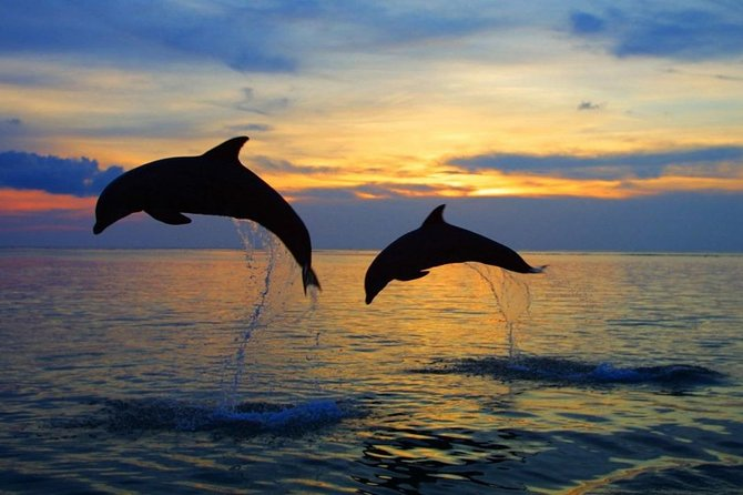 Full-Day Tour to Exploring Dolphin in Lovina Beach
