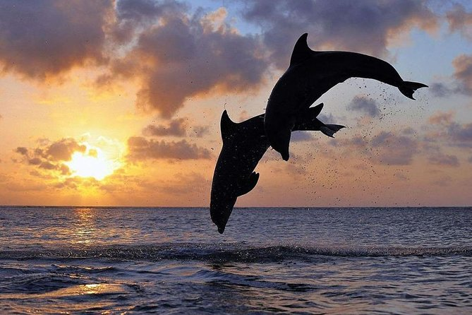 Full-Day Private Tour to Exploring Dolphin in Lovina Beach