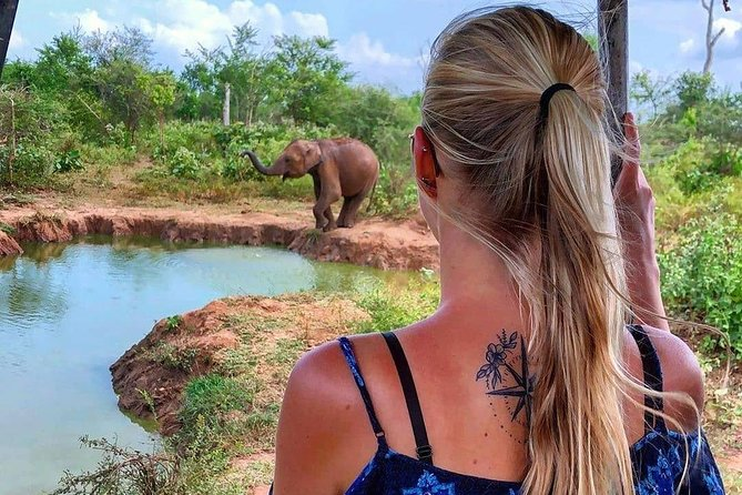 Minneriya Evening Safari Tour from Colombo