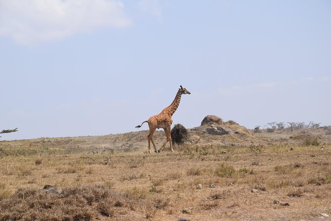 3 Days exciting visit Tarangire, Lake Manyara and Ngorongoro crater
