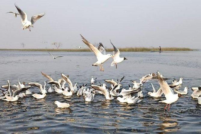 Nal Sarovar Bird Sanctuary Lothal Ancient City Indus Valley Tour from Ahmedabad