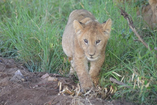 5 Days in Masai Mara- Lake Nakuru-Lake Naivasha