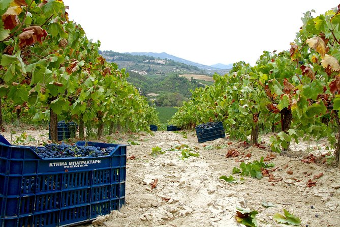 Nemea Wine Tour from Nafplio or Nemea