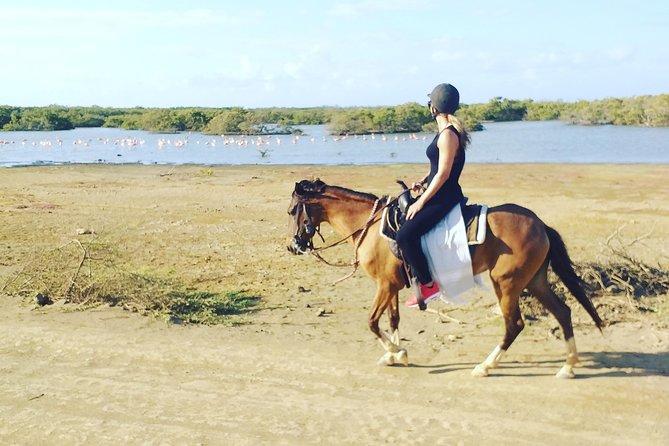 Horseback Riding & Swim cruise schip people