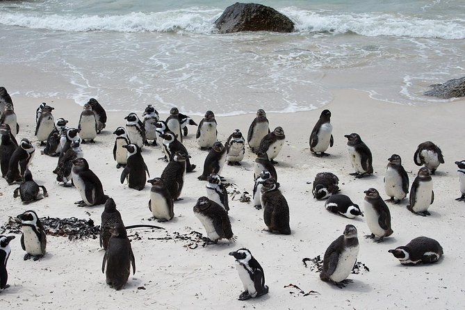 Boulders Penguins and Cape of Good Hope Half Day Shared Tour
